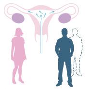 inseminazione eterologa fivmadrid