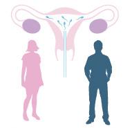 inseminazione omologa fivmadrid